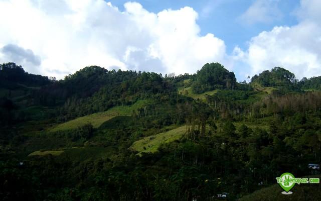 Aspecto de una zona con cultivos agro-forestales en San Pedro Carchá - Foto: Jorge M. Peláez Q.