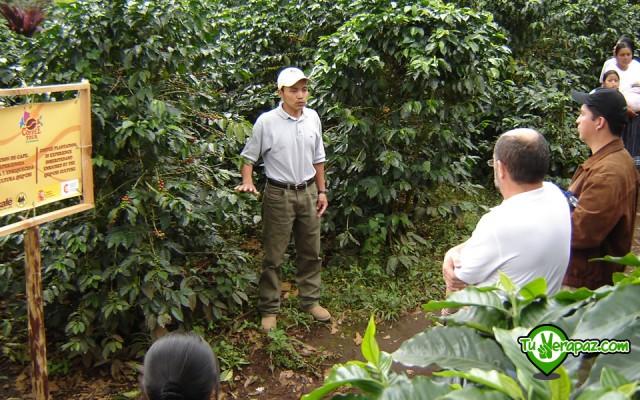 Guía Turística Verapaces - 087 Tour del café Coffee Cooperativa Chicoj